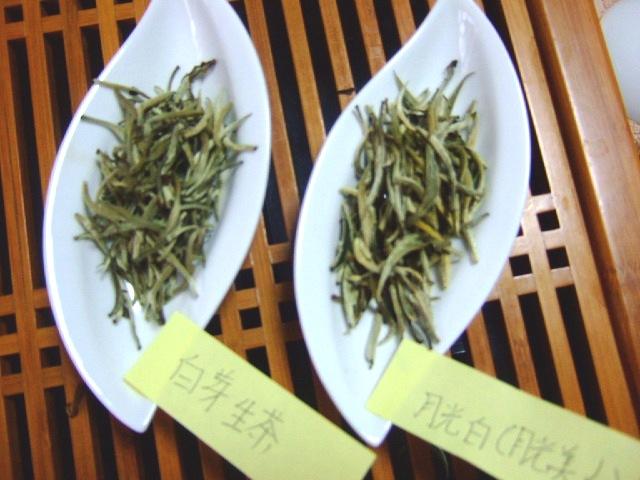 月光白と白芽生茶」
