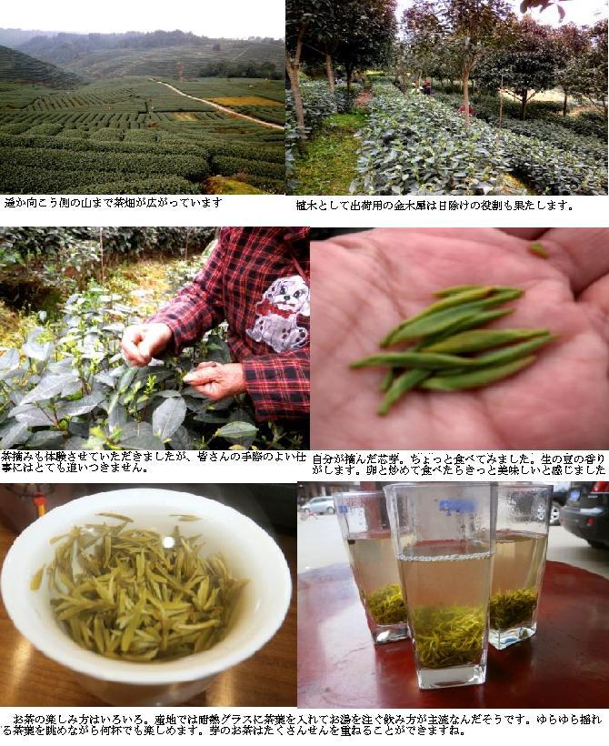 緑茶ページ1